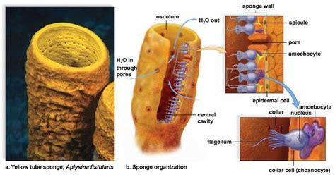 Filter Feeder Definition Biology biology test 2 biology 1108 with cromer at augusta