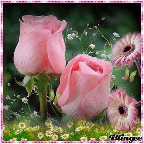 imagenes verdes hermosas mi jardin de rosas picture 128804568 blingee com