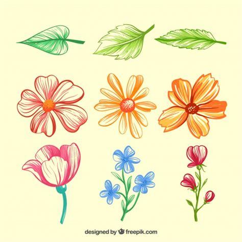 fiori e foglie disegnata a mano variet 224 di fiori e foglie scaricare