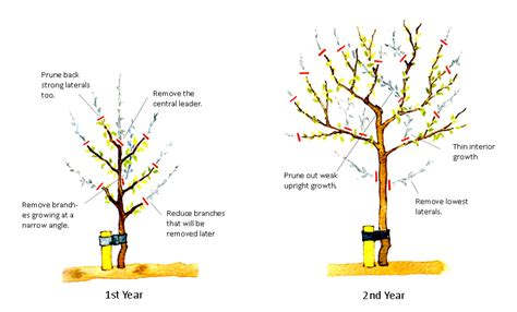 landscape advice gavin jones - How Do You Prune Fruit Trees