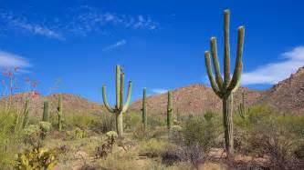 Park City Vacation Home Rentals - saguaro national park in tucson arizona expedia