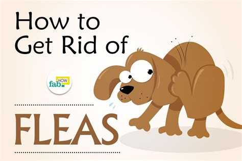 how to get rid of fleas on dogs fast fab how