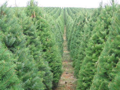 best oregon christmas tree farm your tree s carbon footprint sightline institute
