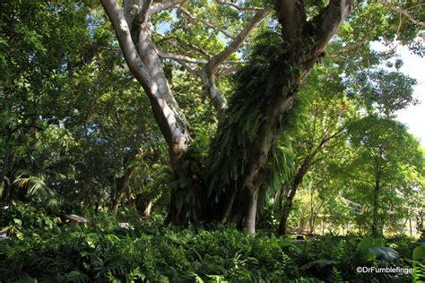 botanical gardens oahu hawaii a tropical oasis wahiawa botanical garden oahu travelgumbo