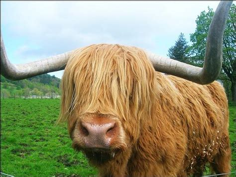 haircuts windham me where do cows go picture photo attachment jpg