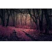 Purple Heaven In Forest HD Nature 4k Wallpapers Images