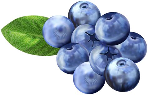 blueberry clipart blueberries png clip image gallery yopriceville