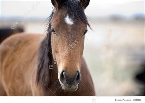 Diskon Pony Browm By Sweety domestic animals sweet stock picture i1028523 at featurepics