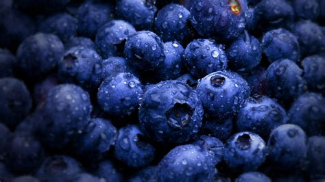 blueberry wallpaper blueberry hd wallpaper 2560x1440 23916