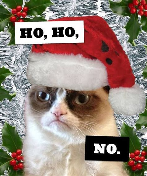 Grumpy Cat Christmas Memes - 25 best ideas about grumpy cat christmas on pinterest