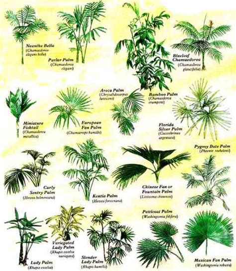 house plant types grow tropical palms at home organic gardening earth news