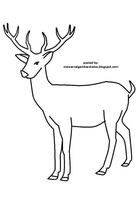 gambar sketsa hewan kreasi warna