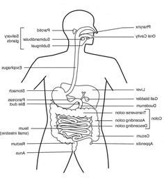 digestive problems after c section 1000 images about digestive health on pinterest reflux