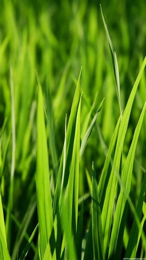 iphone wallpaper green grass nice green grass iphone 6 wallpapers hd and 1080p 6 plus