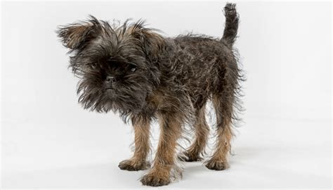small guard dogs 35 worst guard breeds