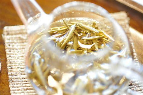 cura gelsomino in vaso gelsomino cura e coltivazione