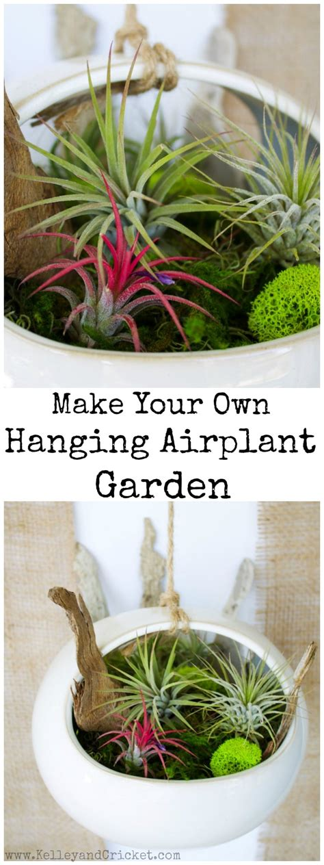 low light hanging plants hanging air plant garden kelley and cricket