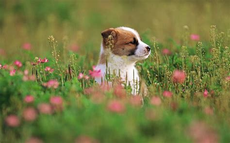 puppy flowers puppies and flowers wallpapers wallpapersafari