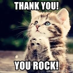 Thank You Cat Meme - thank you cat meme generator