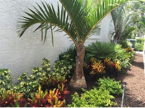 25 best ideas about tropical landscaping on