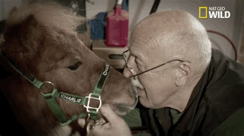 old man horse gif by the incredible dr. pol find & share