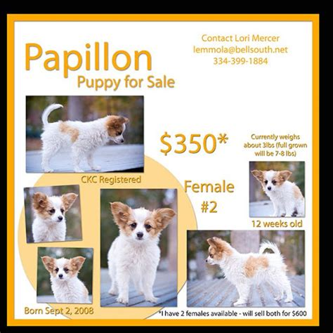 puppy for sale flyer templates the mercer family papillon puppies for sale