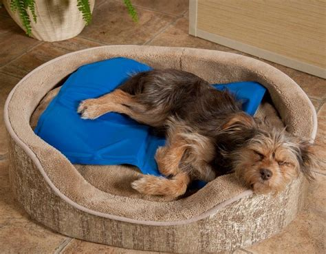 cooling bed for dogs cooling pad for dogs keeping your best friend happy and cool