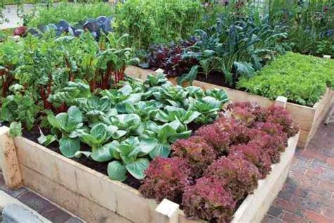 the easy kitchen garden easy kitchen garden step by step organic gardening