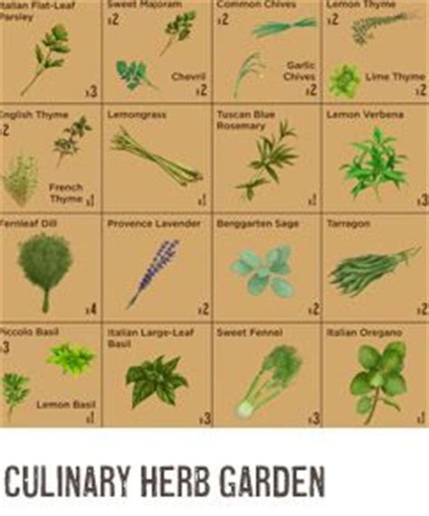 herb garden plan 1000 images about herb posters on pinterest gardens