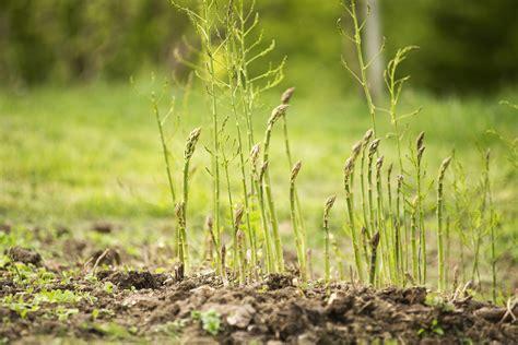 Benih Bunga Edible spekman 6 tanaman edible garden yang boleh anda buat