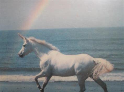 Lovely Pegasus beautiful grunge lovely unicorn pastel pastel unicorns pastel grunge soft grunge
