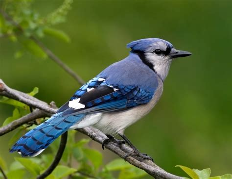Birds Top by Top 10 Most Beautiful Birds In The World