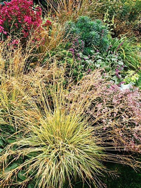 17 top ornamental grasses