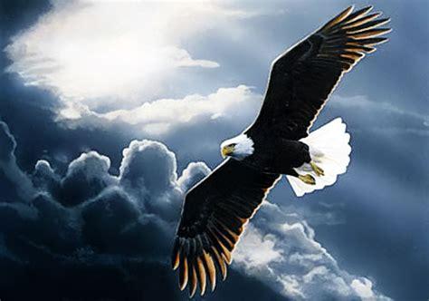 bagai rajawali refleksi hidup terbanglah bagai rajawali