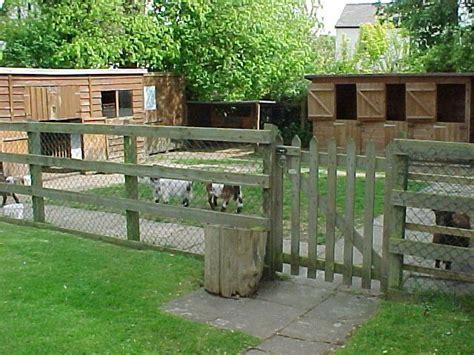 pygmy goat house plans 25 best ideas about pygmy goat house on pinterest goat house goat shelter and goat