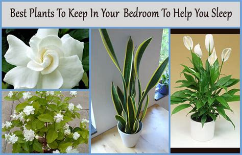 best houseplants to keep in your bedroom for better sleep home gardeners page 19 of 20 one stop solutions for