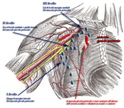 arteria mammaria interna linfonodo sentinella the free dictionary and