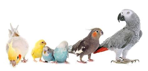 denver parrots 187 blog archiveupcoming events 187 187 meet the birds
