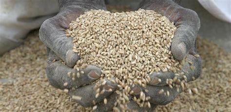 alimentazione africana contraddizioni alimentari nigrizia it