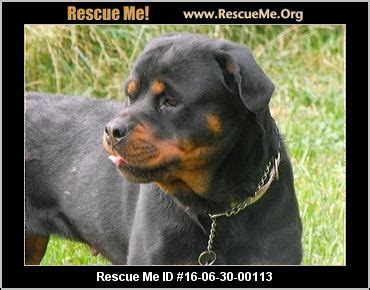rottweiler knee problems maryland rottweiler rescue adoptions rescueme org