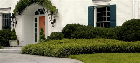 foundation plants for front yard planting accent trees and shrubs