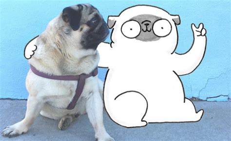 pug smells like corn chips artist gemma 233 creates adorable about pug mochi
