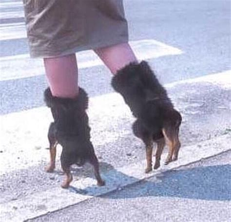 these boot are made for walking