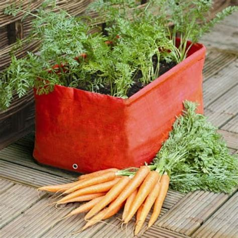 beginners vegetable growing kits