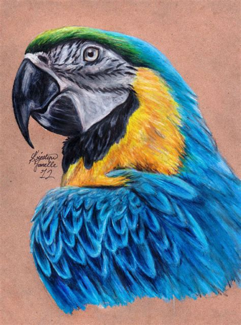 Blue And Gold Macaw Drawing