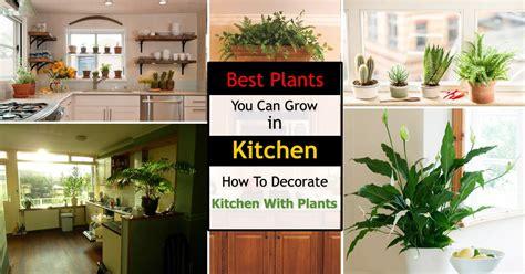 kitchen plants plants  kitchen  decorate