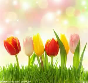 Flowers Of Different Colors - 郁金香设计图 背景底纹 底纹边框 设计图库 昵图网nipic com