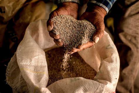 quinoa in cucina ricette come si usa la quinoa in cucina dissapore