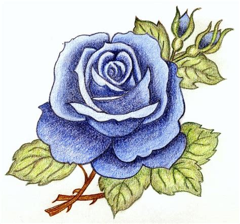 melancholy blue rose by sweetmarly on deviantart