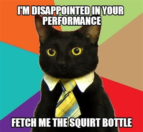 Business Cat Meme - disappointed business cat meme guy